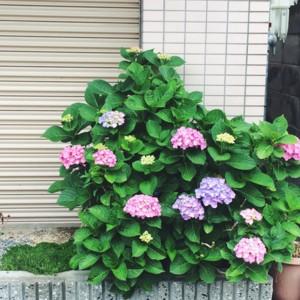 f:id:asacafe:20160603124108j:image