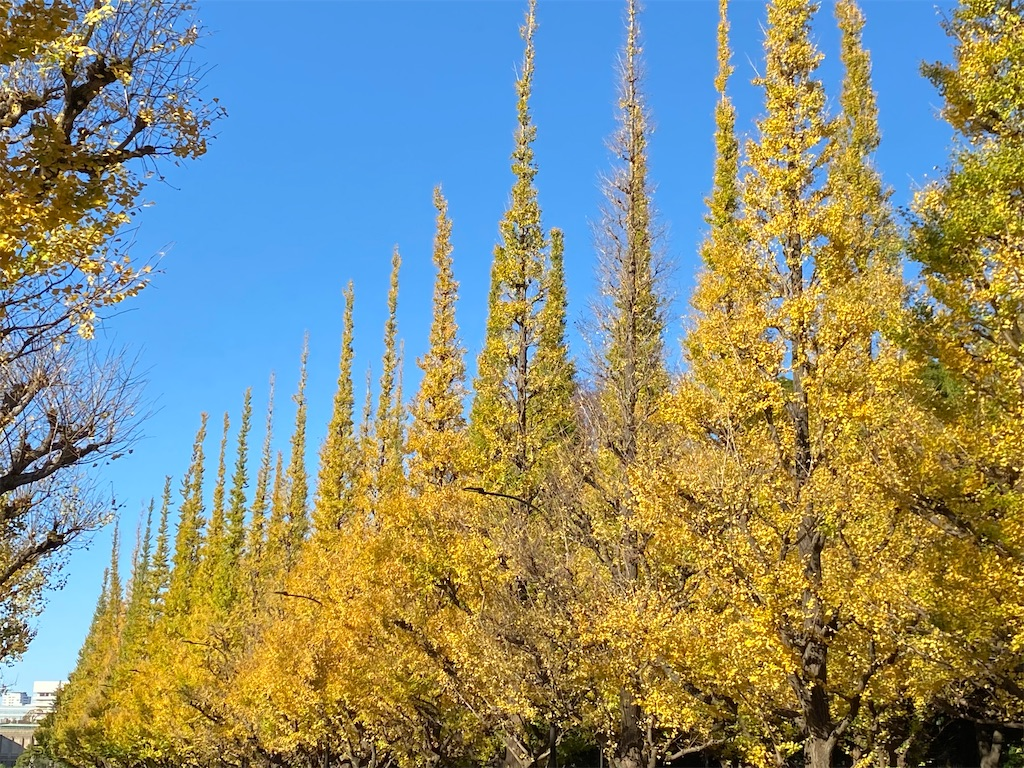 【神宮外苑】いちょう並木の紅葉