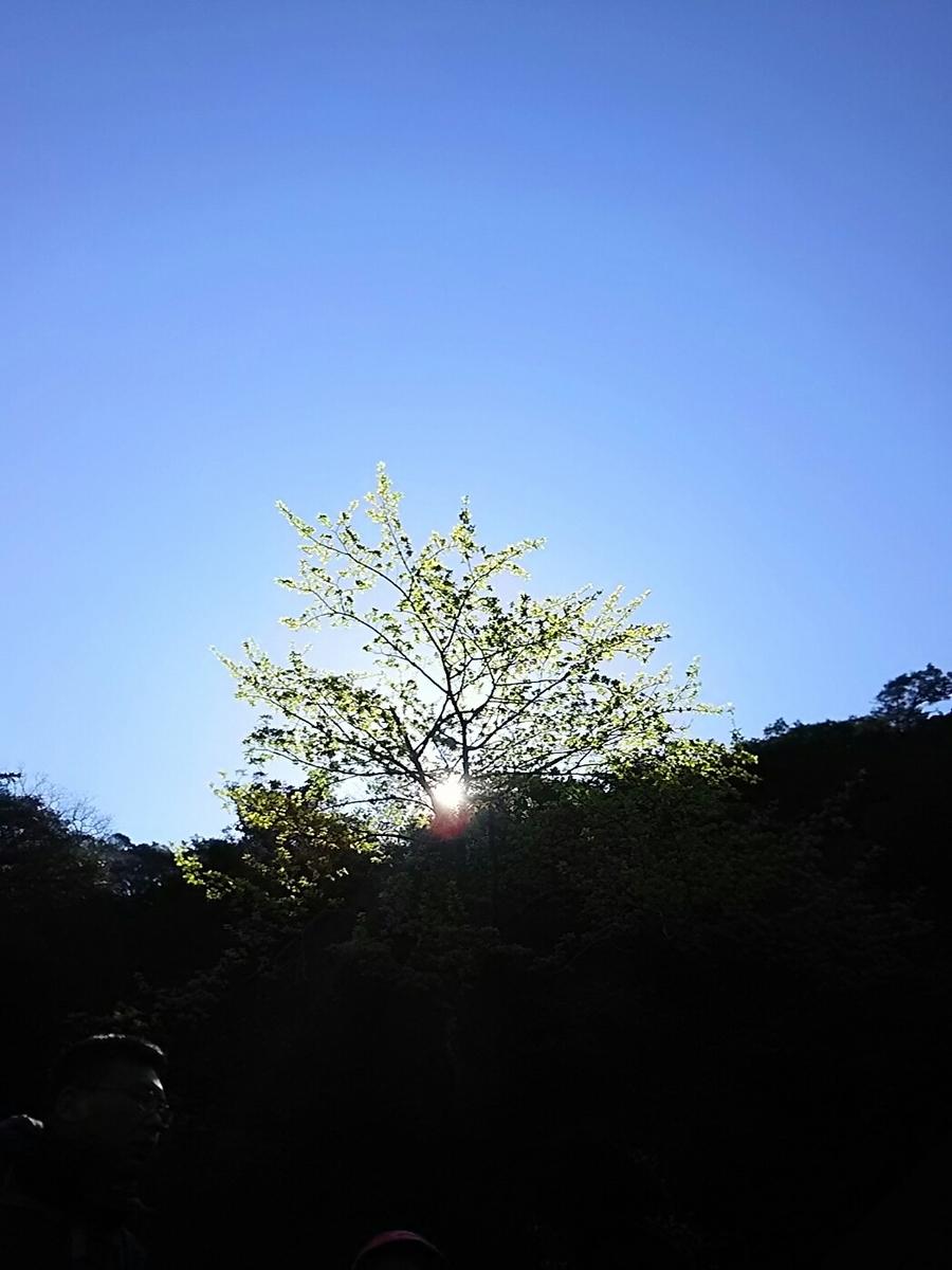 f:id:asadaseiichi1213:20190413214659j:plain