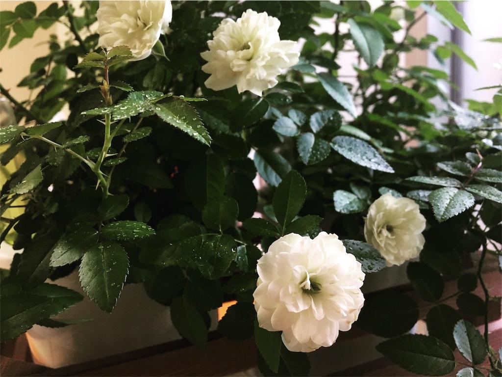 f:id:asagao-nikki:20180215225917j:image
