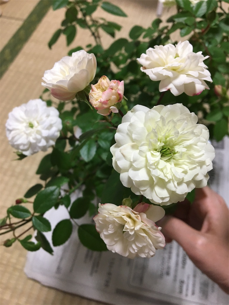 f:id:asagao-nikki:20180215231626j:image