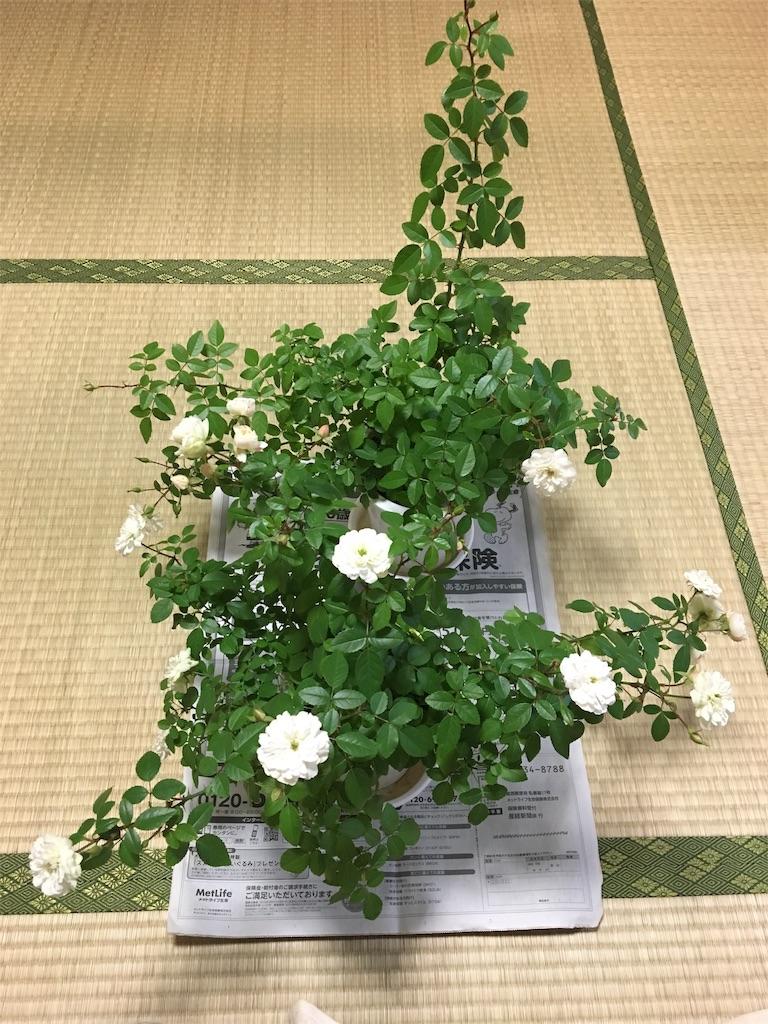 f:id:asagao-nikki:20180217002625j:image