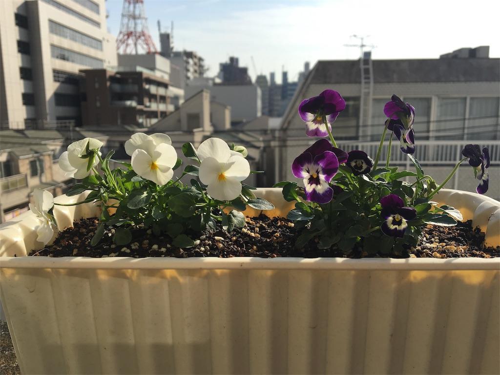 f:id:asagao-nikki:20180217103401j:image