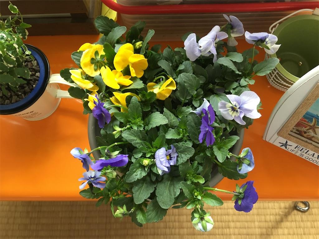 f:id:asagao-nikki:20180217104227j:image