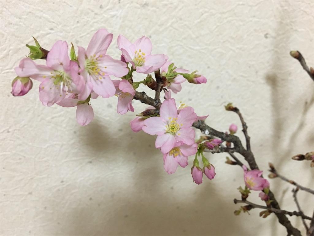 f:id:asagao-nikki:20180224001957j:image