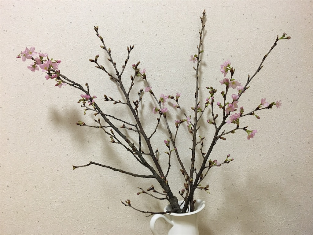 f:id:asagao-nikki:20180224002614j:image