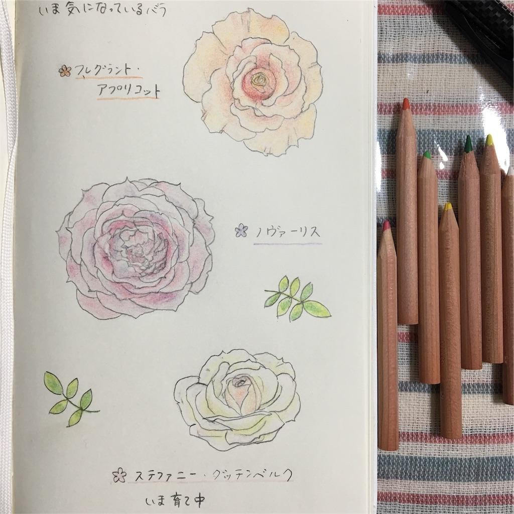 f:id:asagao-nikki:20180319231317j:image