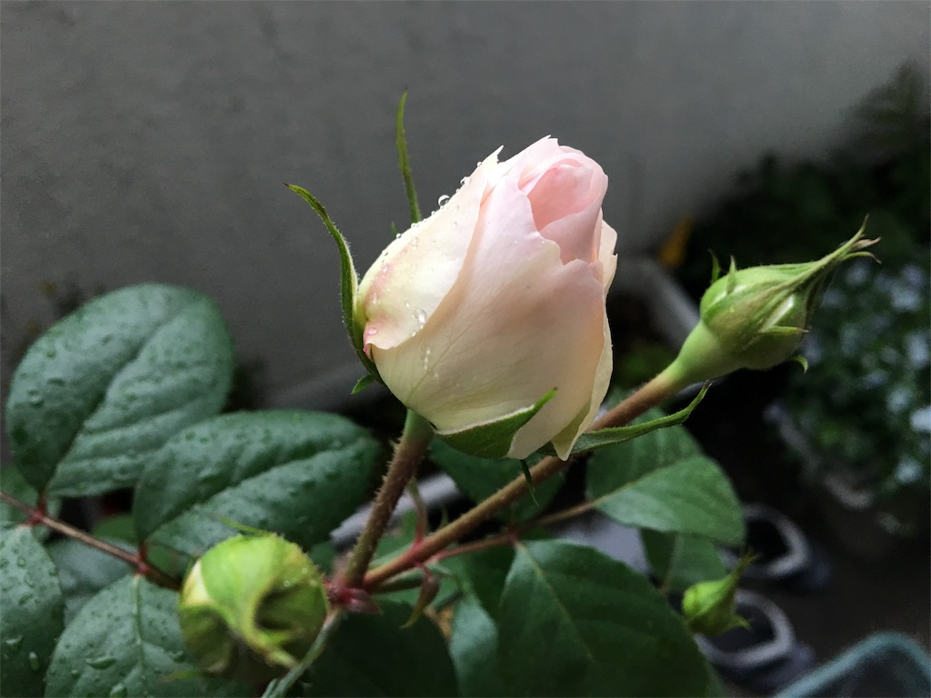 f:id:asagao-nikki:20180428202559j:image
