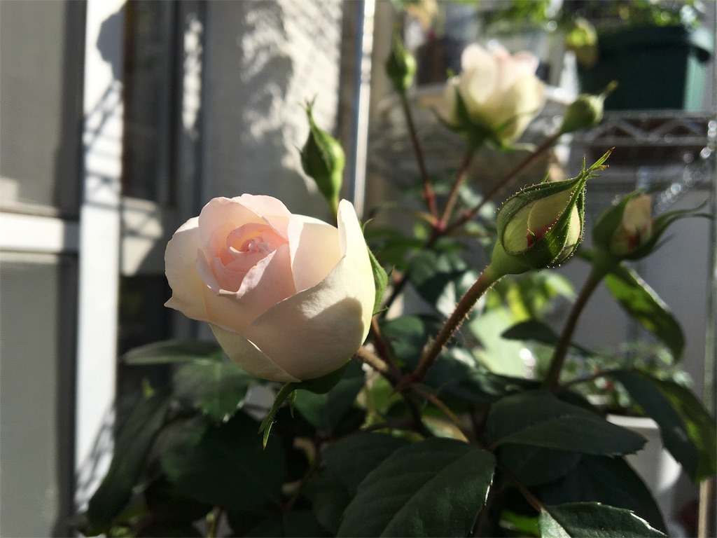f:id:asagao-nikki:20180428202729j:image