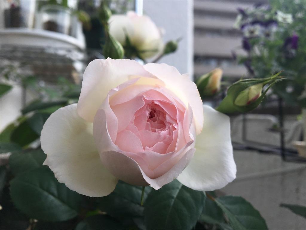 f:id:asagao-nikki:20180428202910j:image