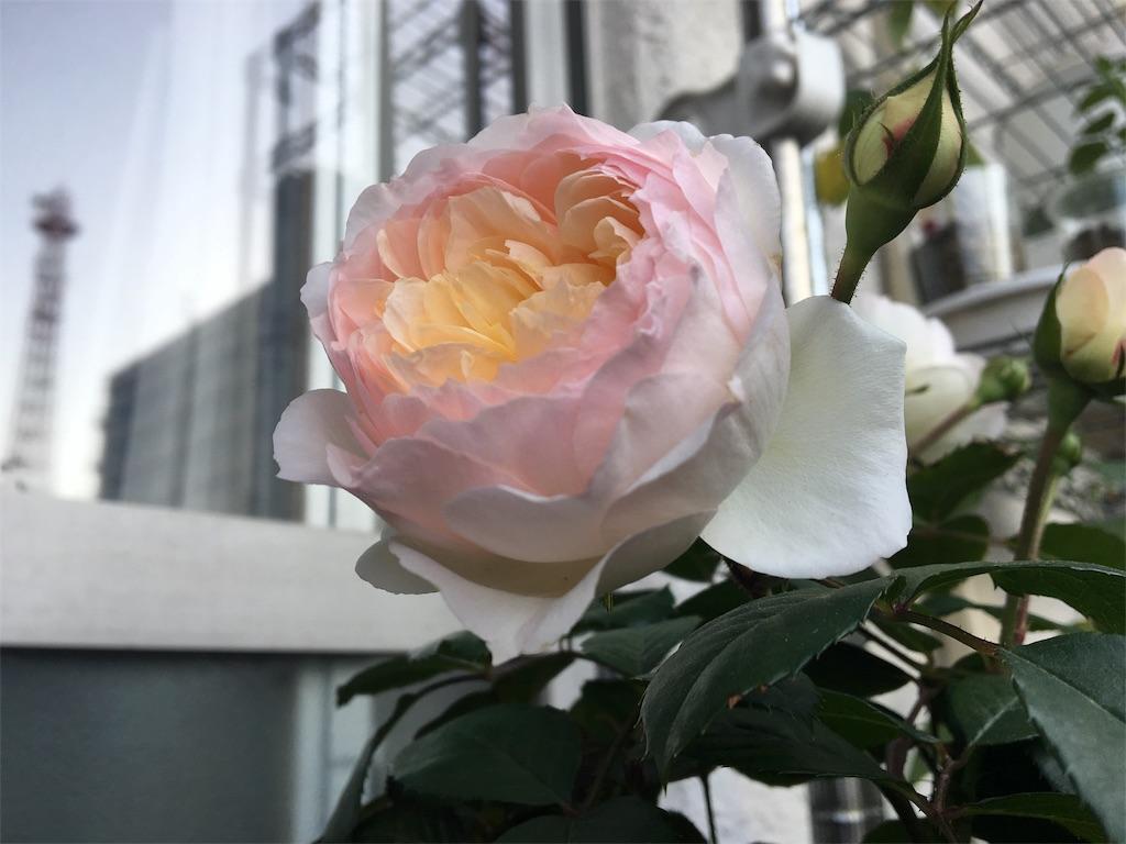 f:id:asagao-nikki:20180428203030j:image