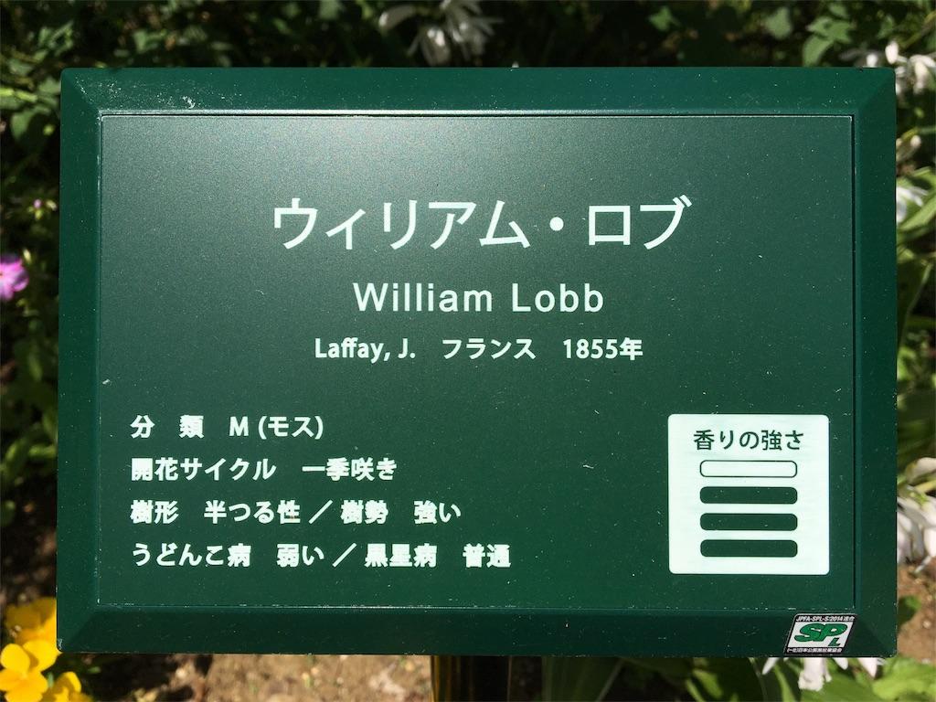 f:id:asagao-nikki:20180429174135j:image