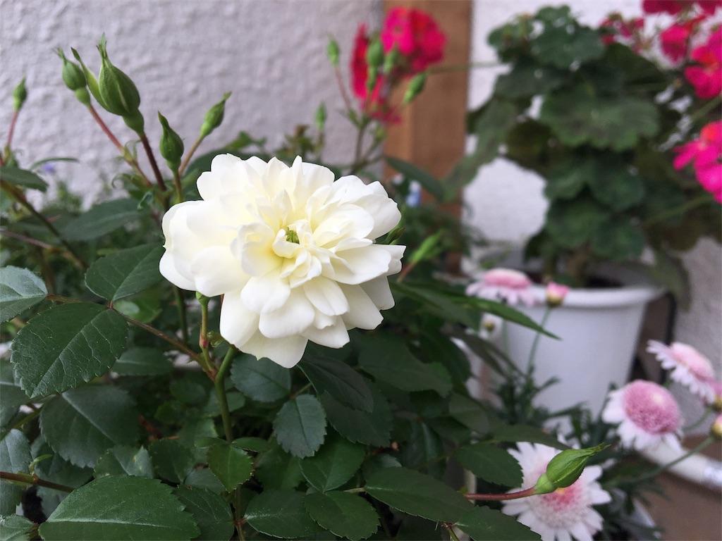 f:id:asagao-nikki:20180503153348j:image