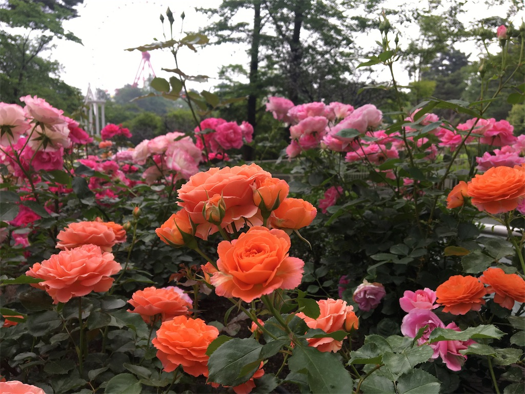f:id:asagao-nikki:20180518201723j:image
