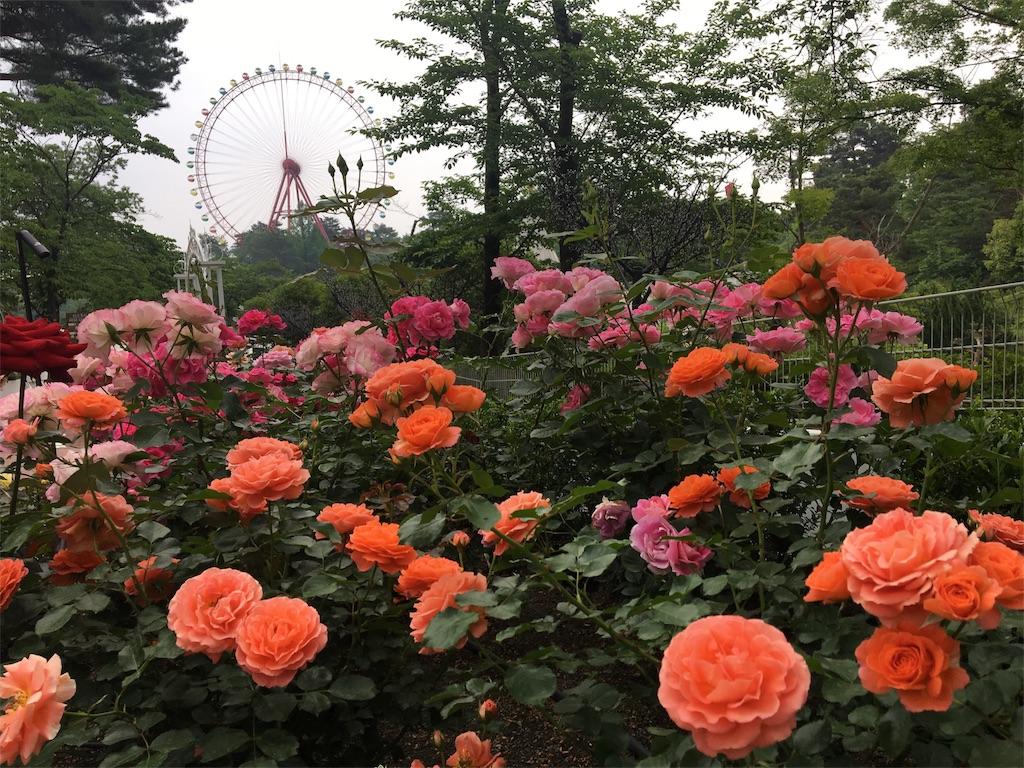 f:id:asagao-nikki:20180518204326j:image
