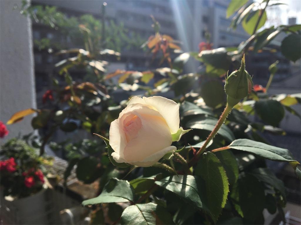 f:id:asagao-nikki:20180608130810j:image