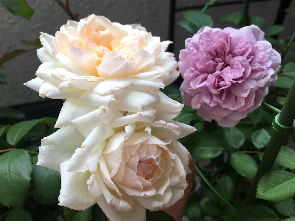 f:id:asagao-nikki:20180617121801j:image