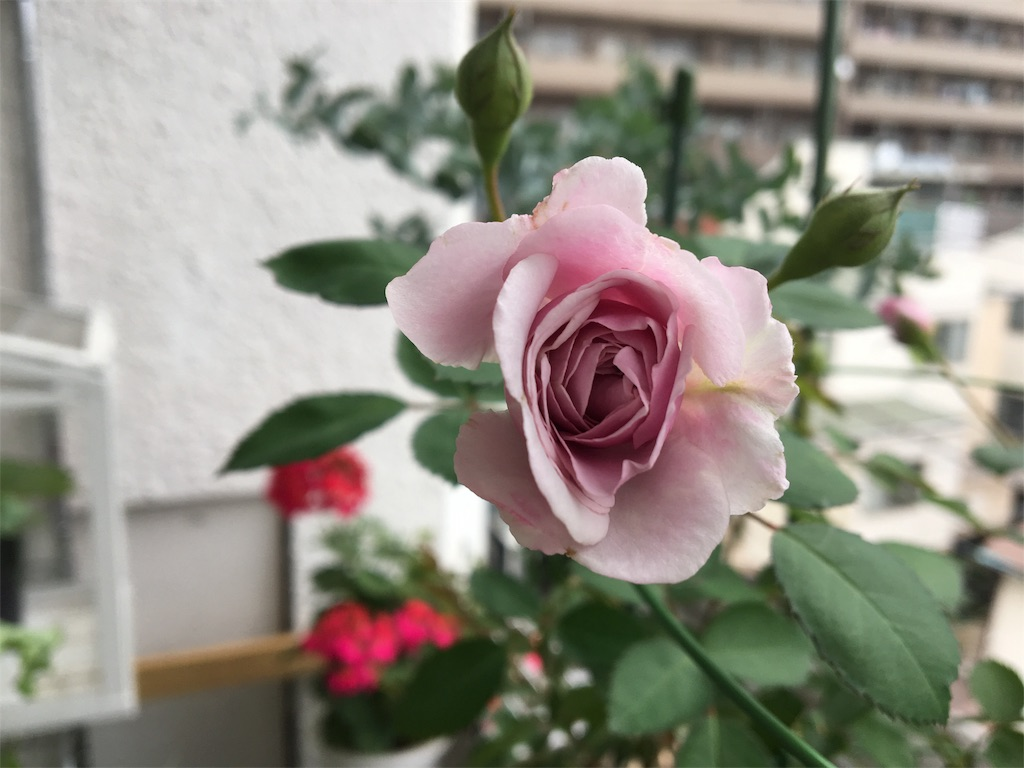 f:id:asagao-nikki:20180617122919j:image