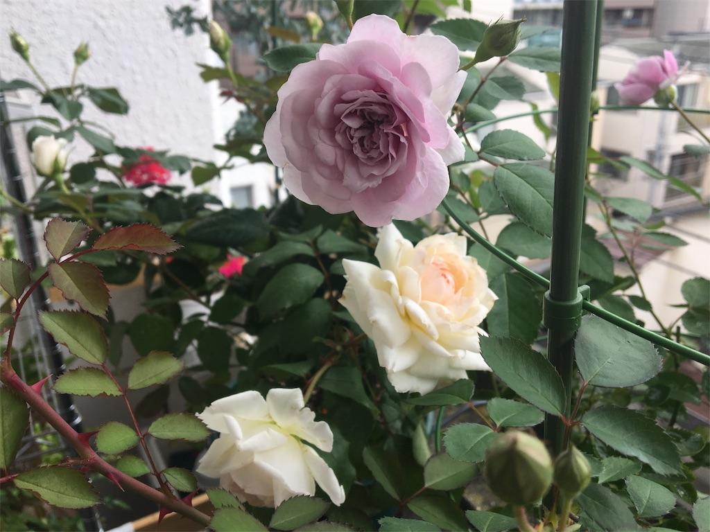 f:id:asagao-nikki:20180617123002j:image