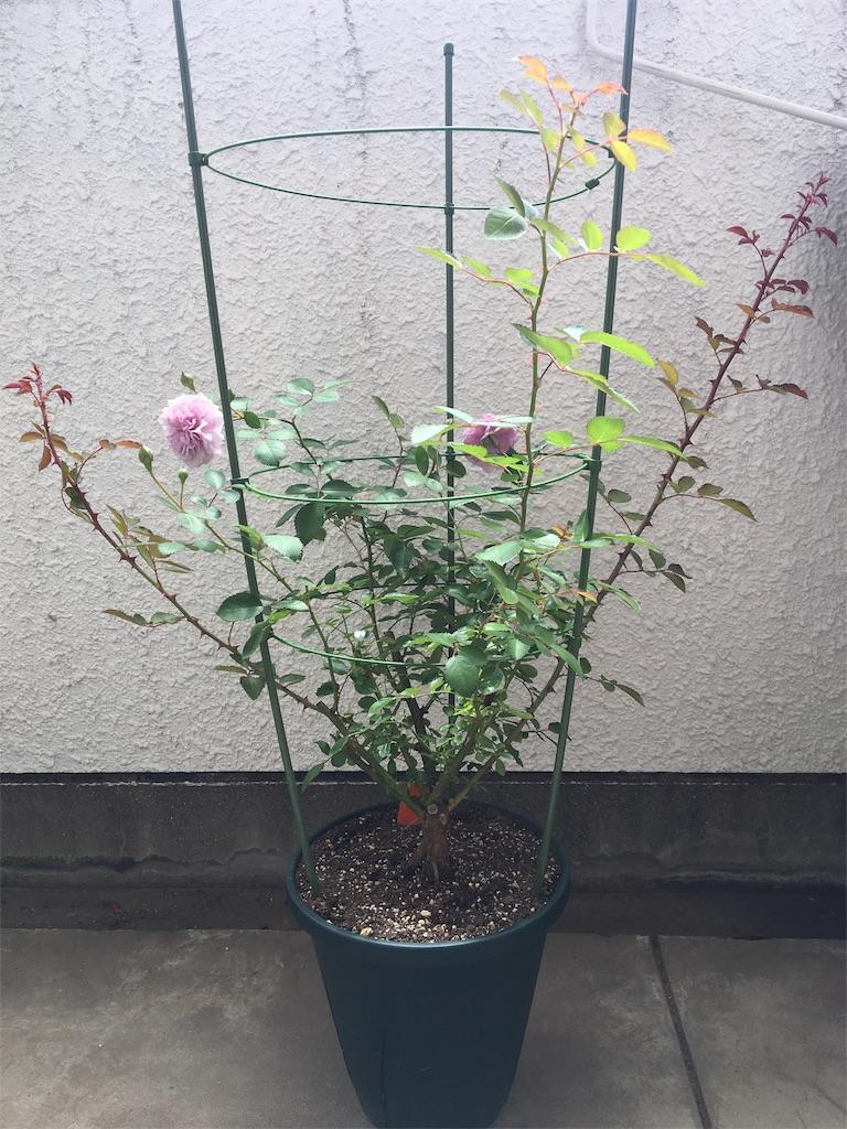 f:id:asagao-nikki:20180617125258j:image