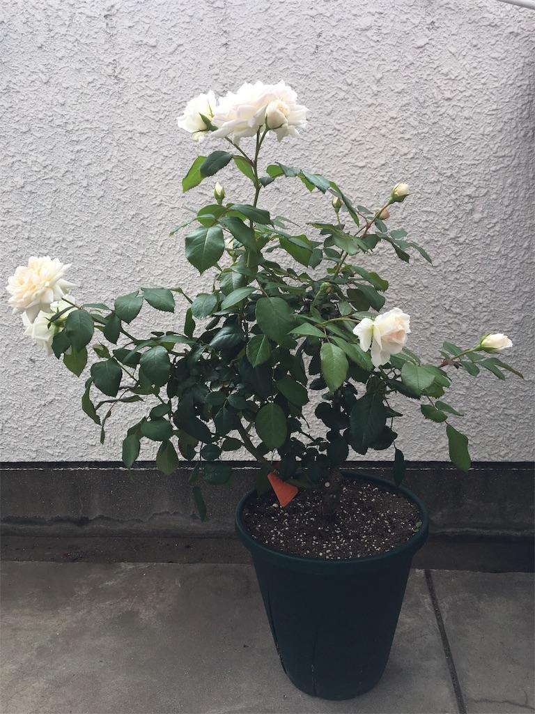 f:id:asagao-nikki:20180617125325j:image