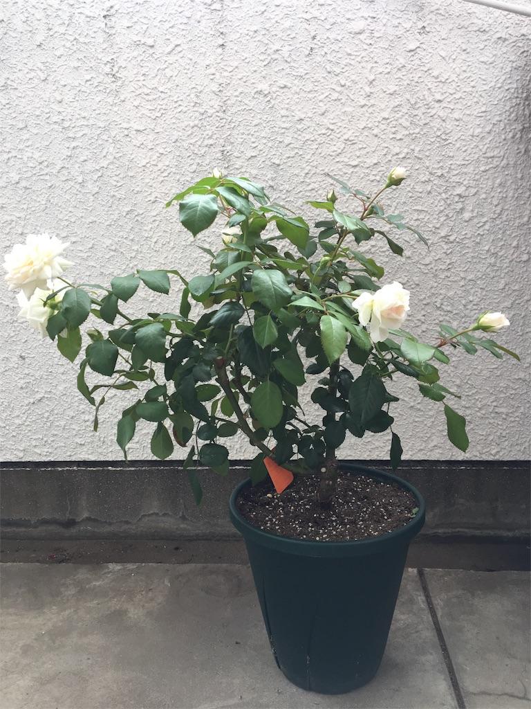 f:id:asagao-nikki:20180617125353j:image