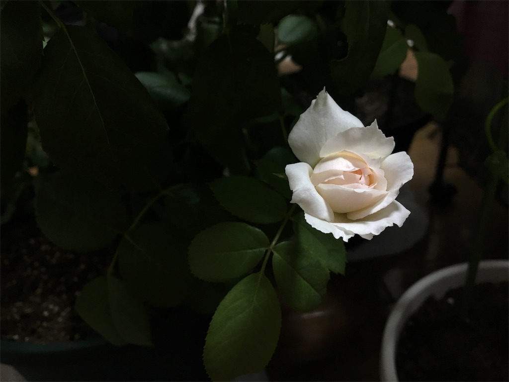 f:id:asagao-nikki:20180728020059j:image