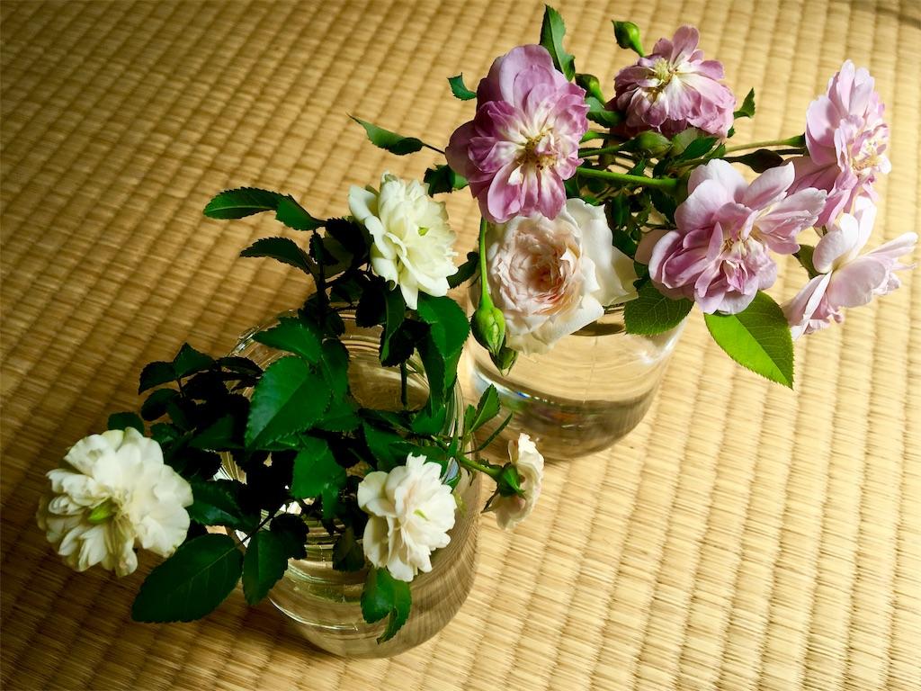 f:id:asagao-nikki:20180804192916j:image