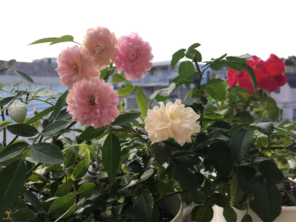 f:id:asagao-nikki:20181010073001j:image