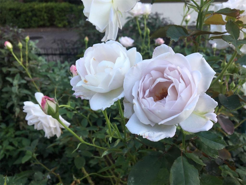 f:id:asagao-nikki:20181021170920j:image