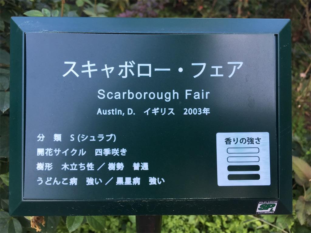 f:id:asagao-nikki:20181021171003j:image