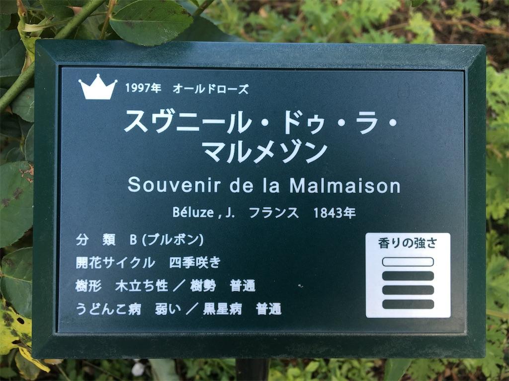f:id:asagao-nikki:20181021171114j:image