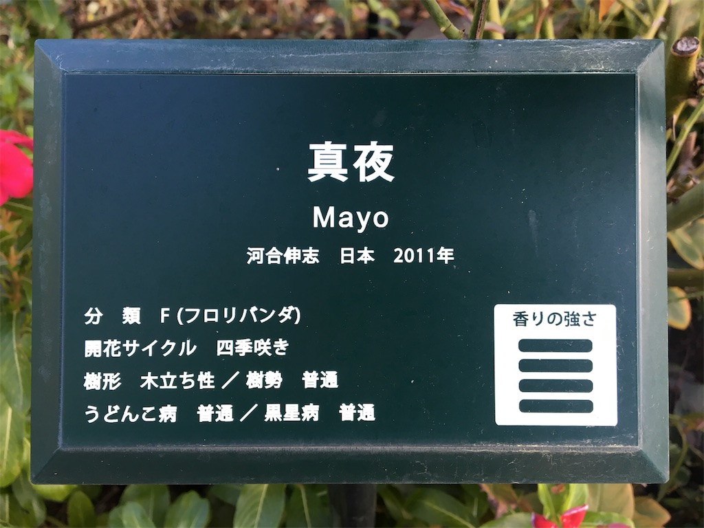 f:id:asagao-nikki:20181021171250j:image