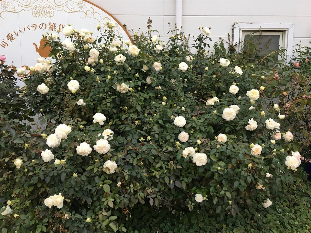 f:id:asagao-nikki:20181104010403j:image