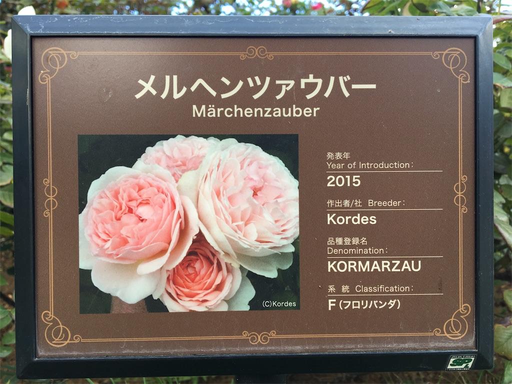 f:id:asagao-nikki:20181104011734j:image