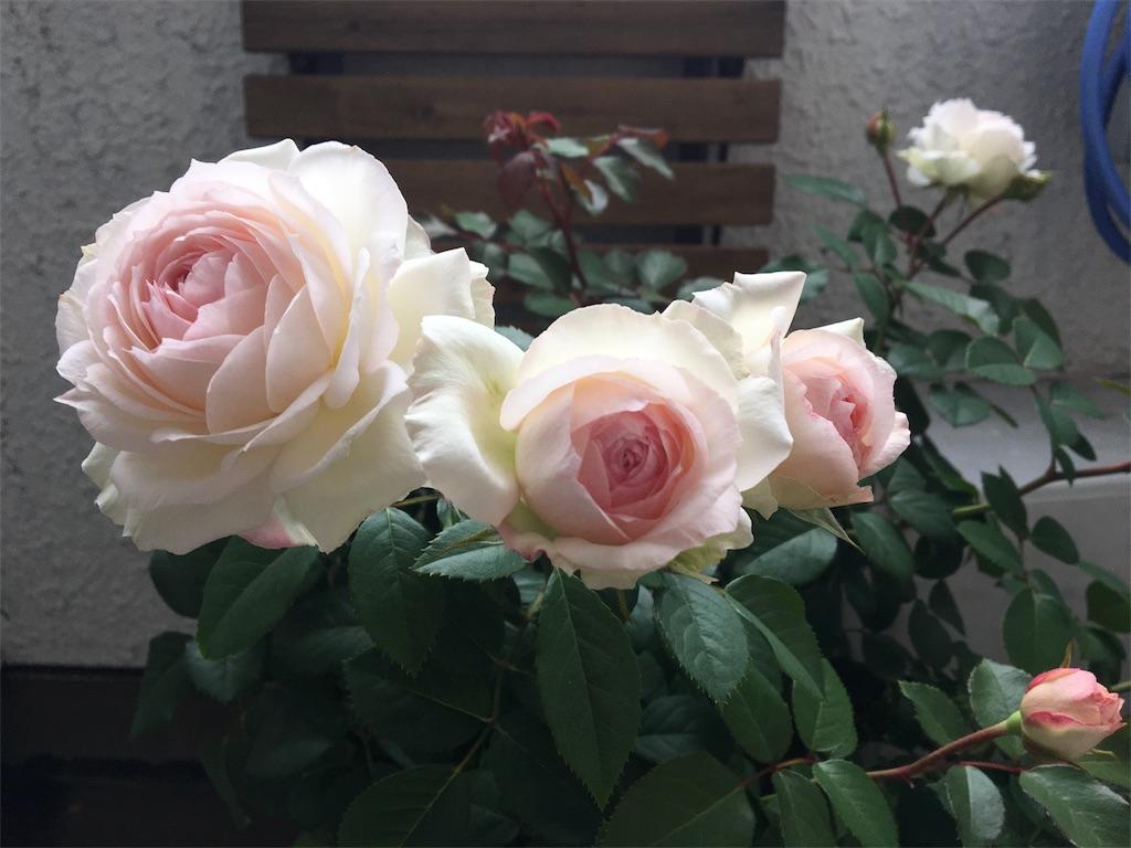f:id:asagao-nikki:20181111203658j:image