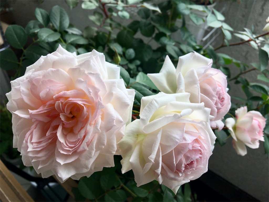 f:id:asagao-nikki:20181111203735j:image