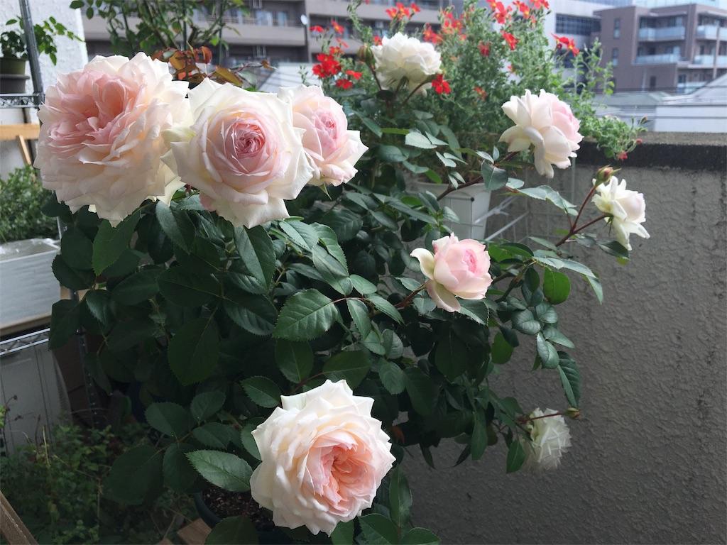 f:id:asagao-nikki:20181111205853j:image