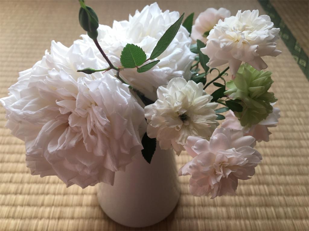 f:id:asagao-nikki:20181117092919j:image