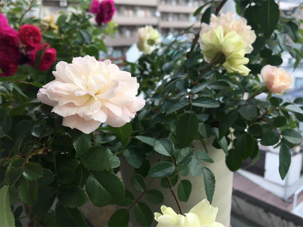 f:id:asagao-nikki:20181129210116j:image