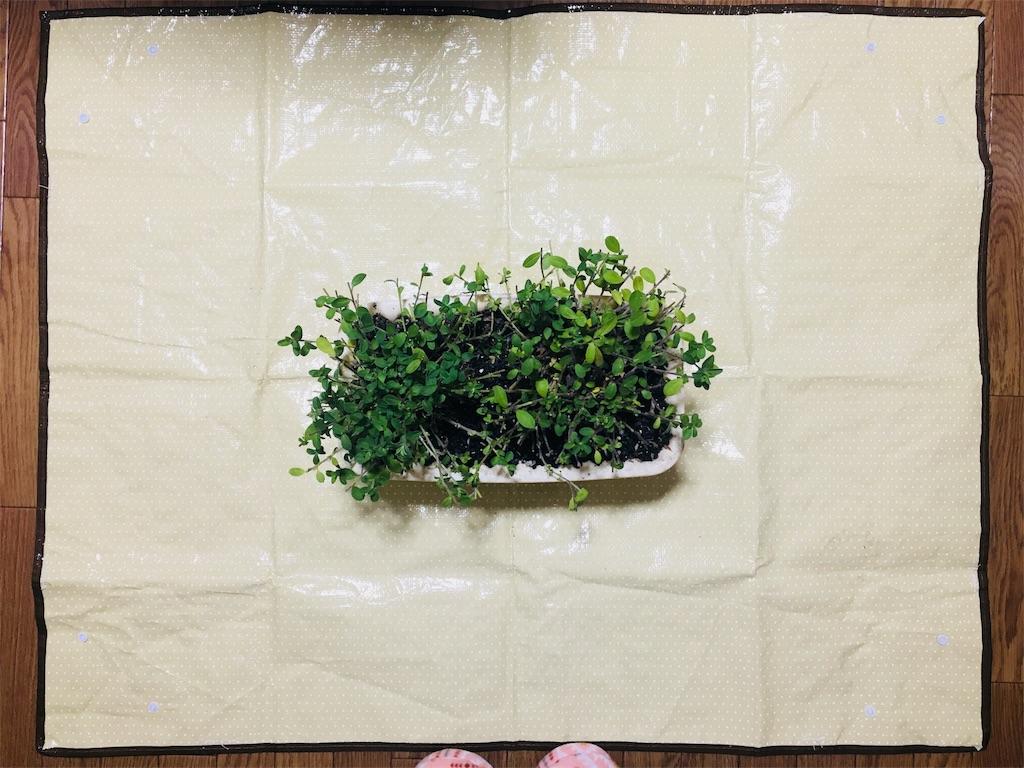 f:id:asagao-nikki:20181209181502j:image