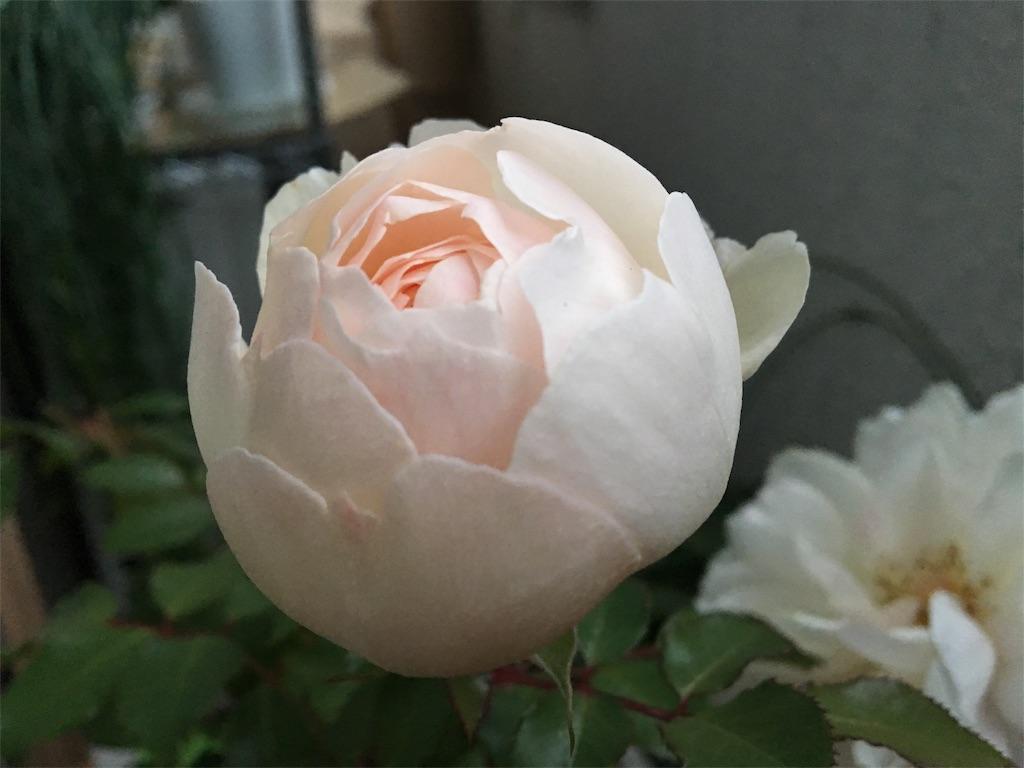 f:id:asagao-nikki:20181222172137j:image