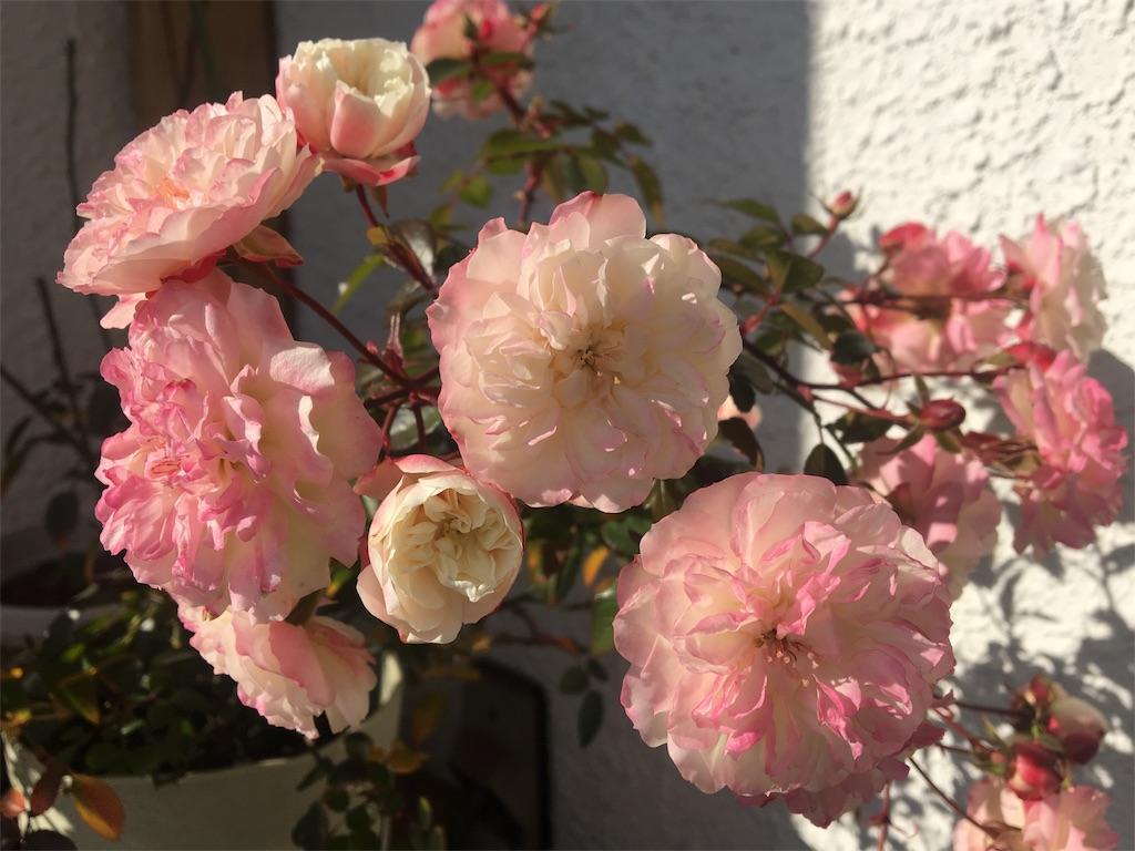 f:id:asagao-nikki:20190126103657j:image