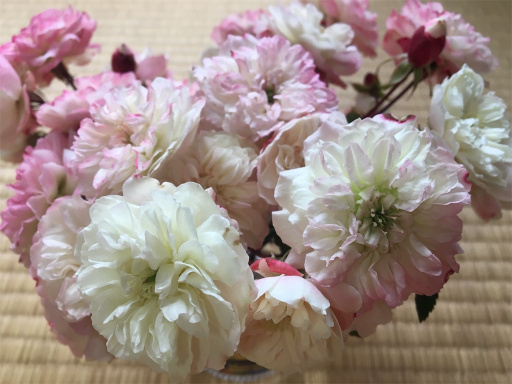 f:id:asagao-nikki:20190208145231j:image