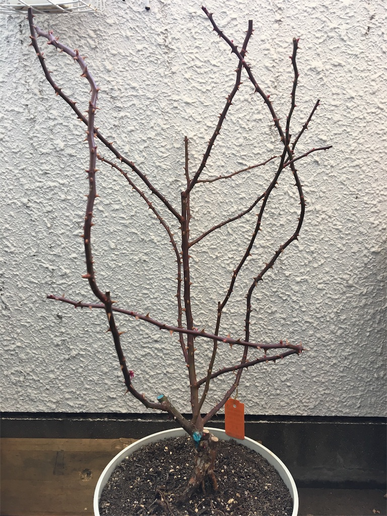 f:id:asagao-nikki:20190223153856j:image