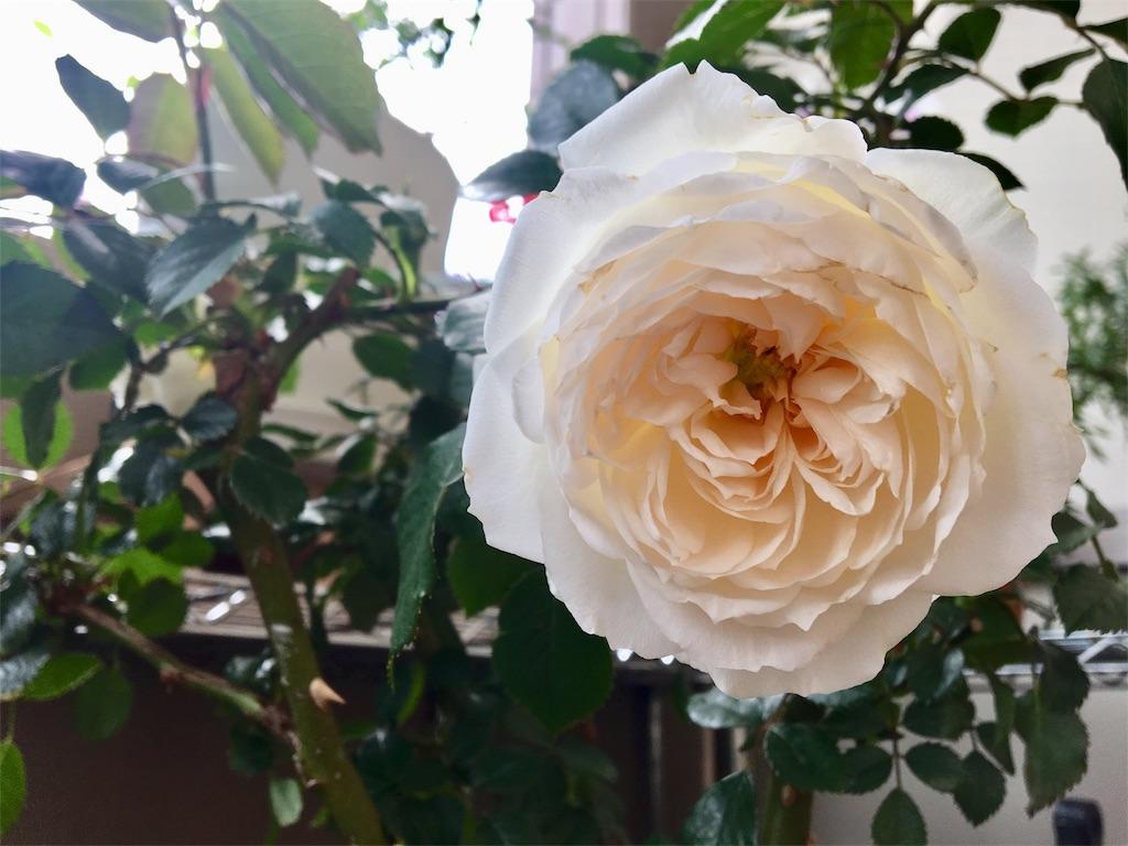 f:id:asagao-nikki:20190510132918j:image