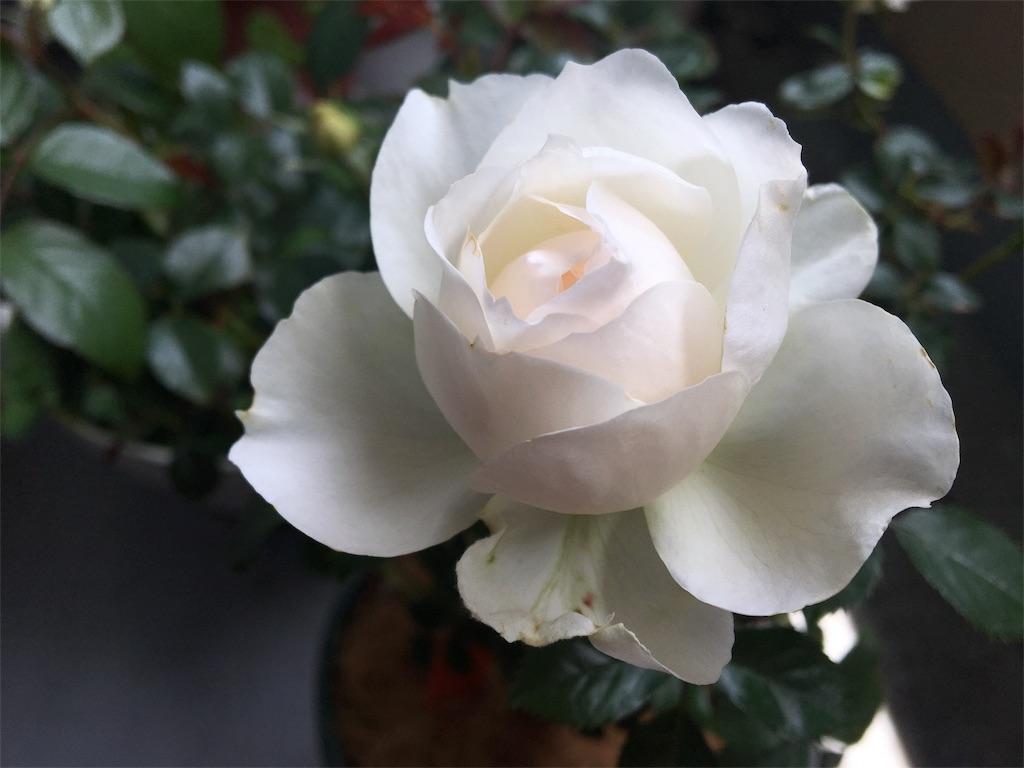 f:id:asagao-nikki:20190512122538j:image