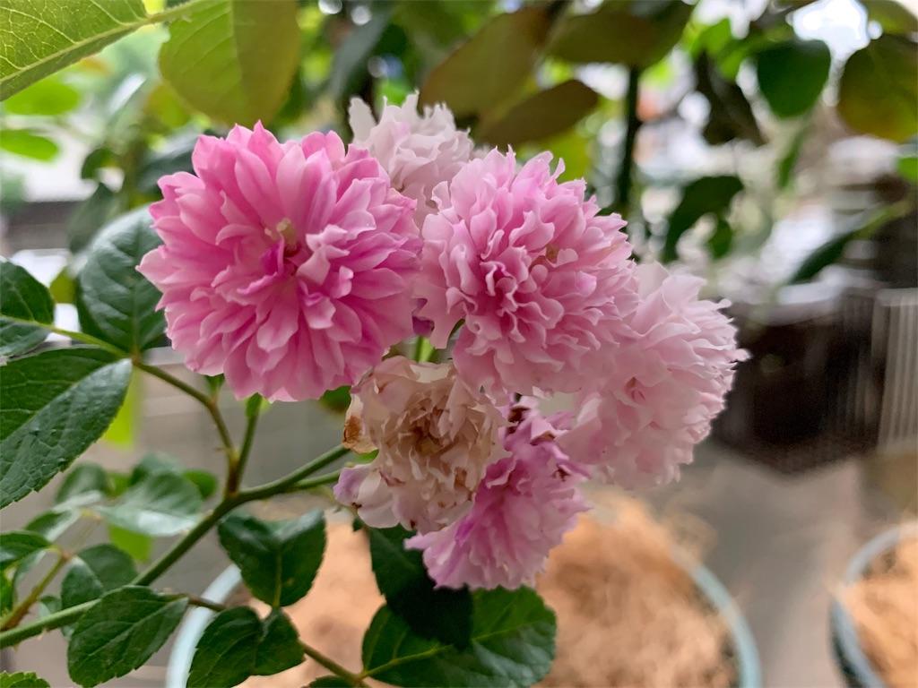 f:id:asagao-nikki:20190714214058j:image