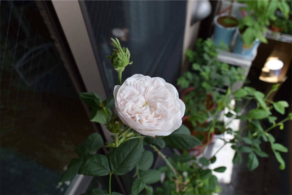 f:id:asagao-nikki:20190922122111j:image