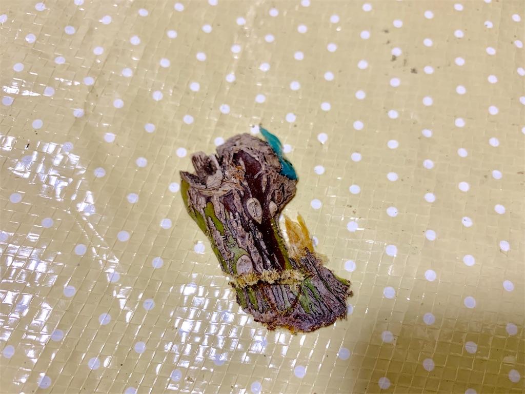 f:id:asagao-nikki:20191006120747j:image